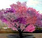 image of tree blossoming